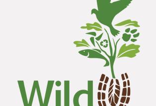 wild step thumbnail