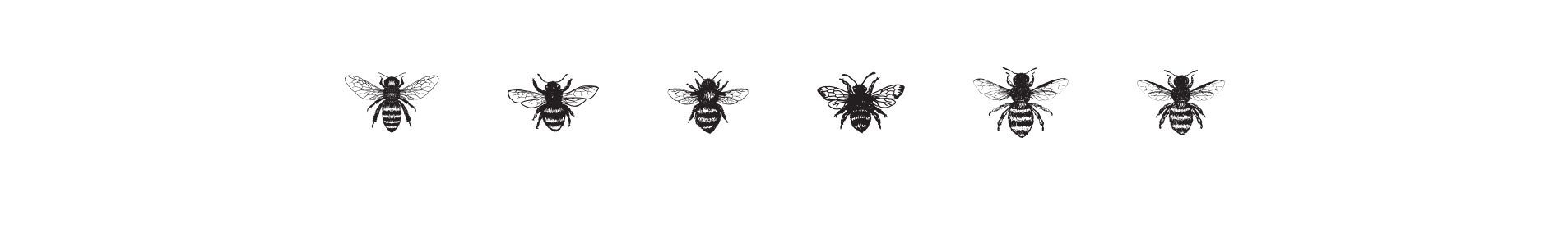 bees for bjorns honey logo design